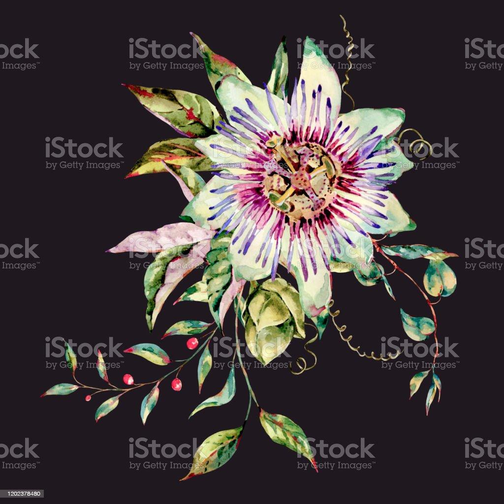 Watercolor Passiflora Greeting Card Flowers Leaves Vintage Floral