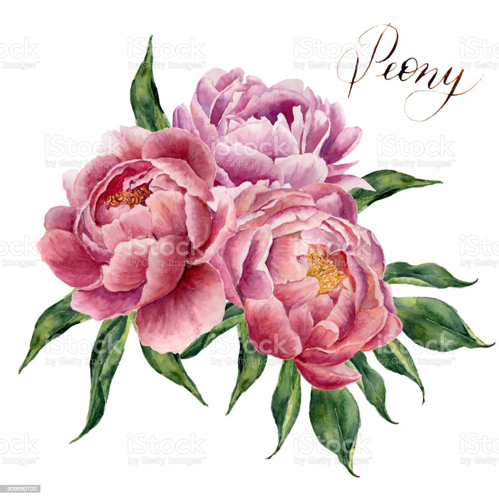 Watercolor Peonies Bouquet Isolated On White Background Hand
