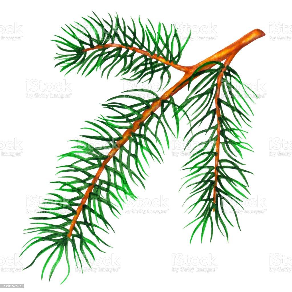 Suluboya çam Ağacı Dalı Stok Vektör Sanatı Ağaçnin Daha Fazla