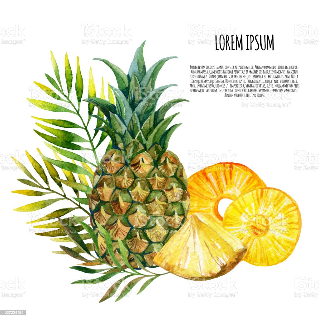 watercolor pineapple card stock vector art amp more images