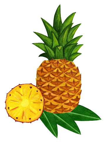 Watercolor pineapple with slice and leaf. Tropical t shirt design. Pineapple poster for restaurant menu, cocktail card, smoothie