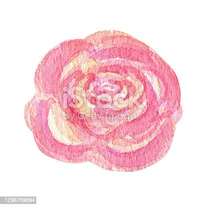 istock Watercolor pink rose flower, summer floral element hand painting isolaited illustration on white background. Make your greeting card, invitation, poster, banner design 1296759594