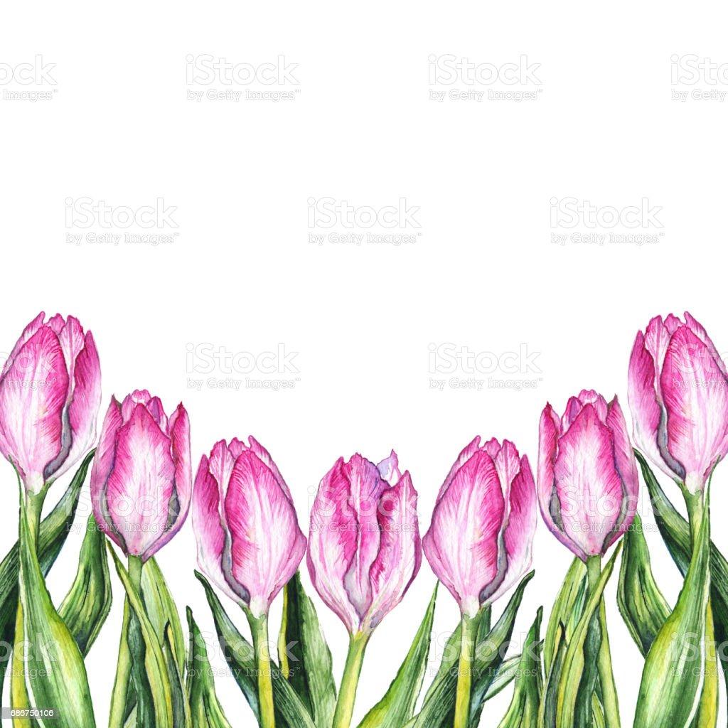 Sulu Boya Pembe Lale çiçek Doğa Sınır çerçeve Stok Vektör Sanatı