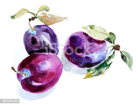 istock Watercolor plum 832081550