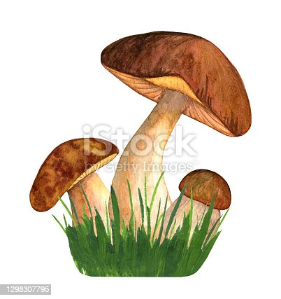 istock Watercolor porcini isolated on white background in the grass. Edible mushroom object. Autumn season for mushroom hunting. Hand drawn illustration 1298307795