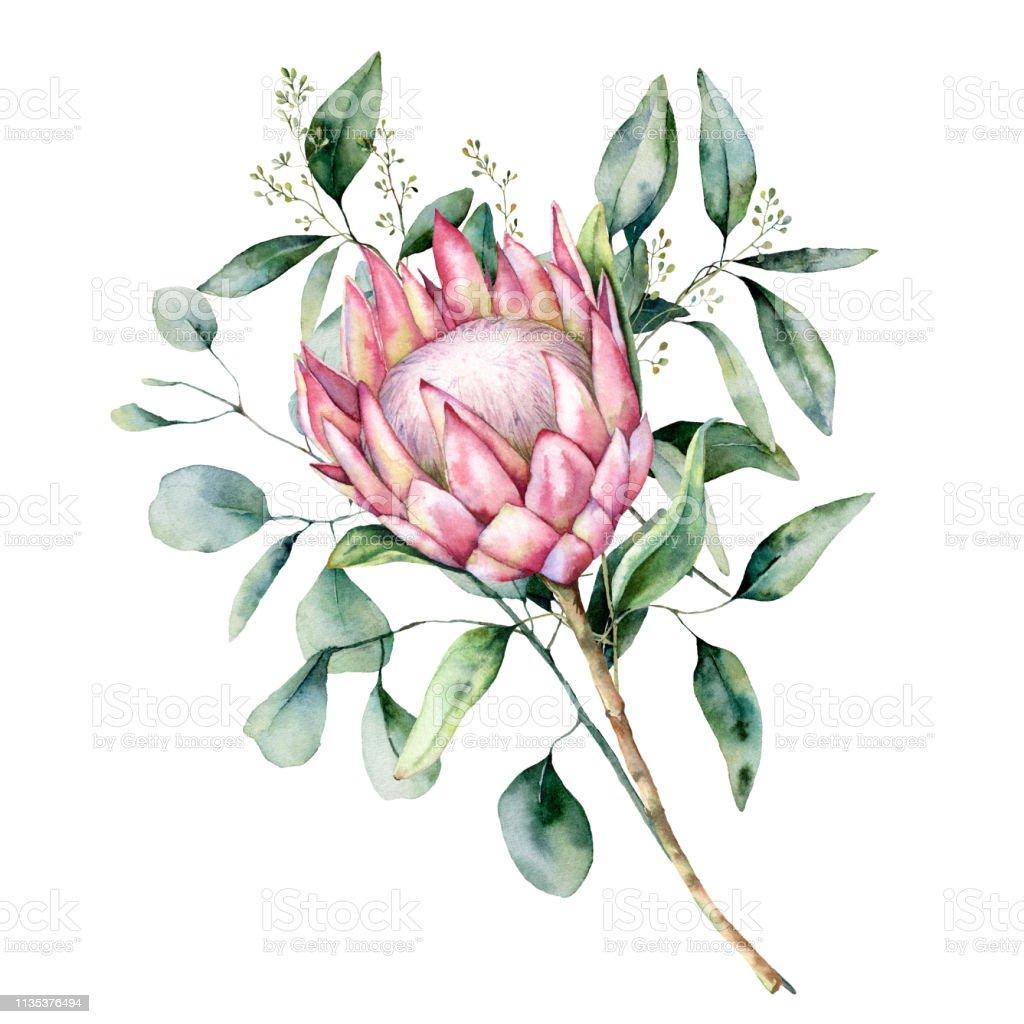 Feuille D Eucalyptus Bouquet bouquet de protea aquarelle avec des feuilles deucalyptus