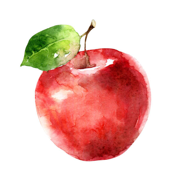ilustrações de stock, clip art, desenhos animados e ícones de watercolor red apple isolated on white background - maçã