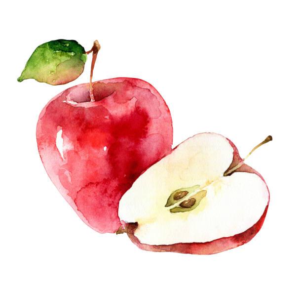illustrazioni stock, clip art, cartoni animati e icone di tendenza di watercolor red apples isolated on white background - mika