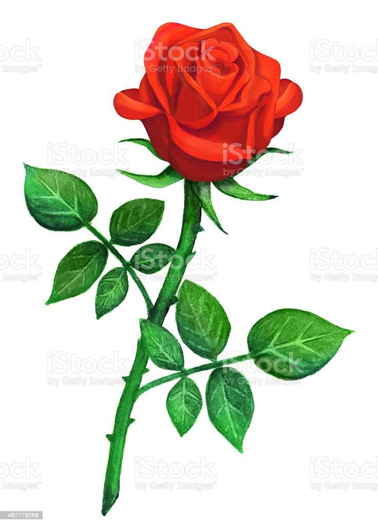 Nett Rose Blume Anatomie Bilder - Menschliche Anatomie Bilder ...
