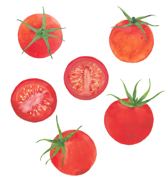 watercolor red tomatoes - cherry tomato stock illustrations
