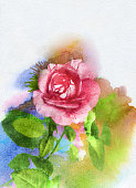 watercolor rose, only my art work