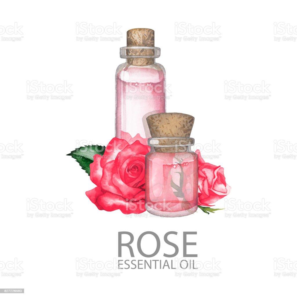 Watercolor rose oil vector art illustration