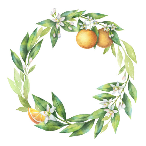 Royalty Free Orange Blossom Clip Art, Vector Images