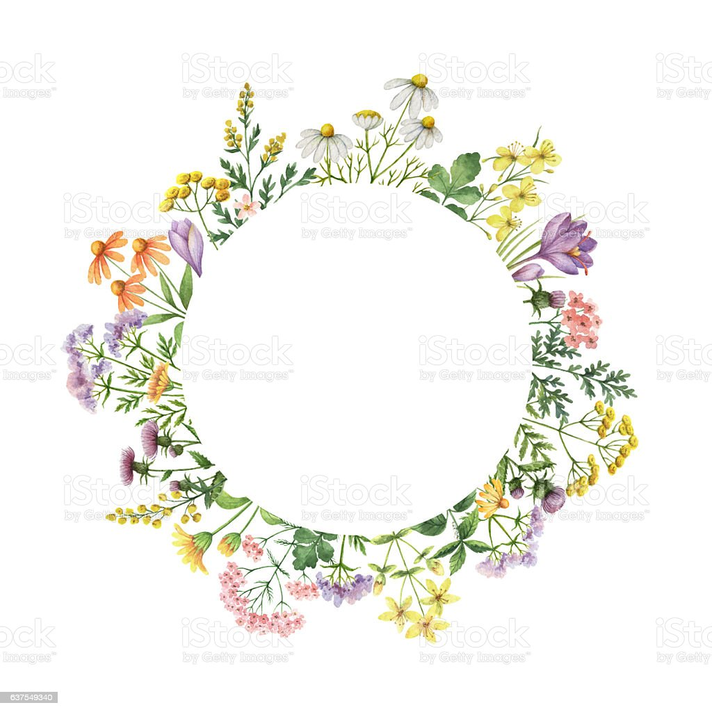 Watercolor round frame with medical plants. ベクターアートイラスト