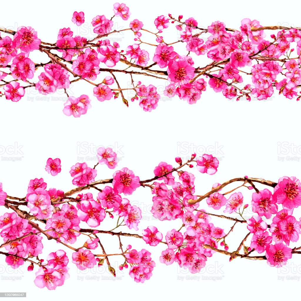 Watercolor Sakura Japan Cherry Branch Blooming Flowers Spring Pink Design Wallpaper Poster Background Cover Fabric Textile Stock Illustration Download Image Now Istock