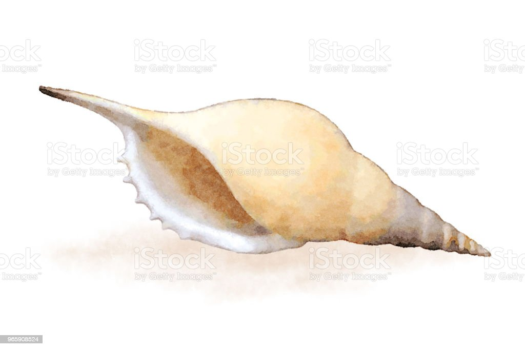 Aquarel zee shell 4 - Royalty-free Aquarel Stockillustraties