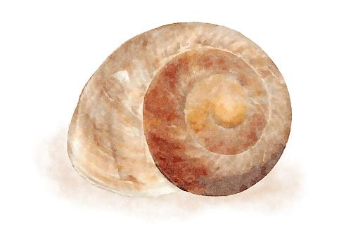 Aquarel Zee Shell 7 Stockvectorkunst en meer beelden van Aquarel