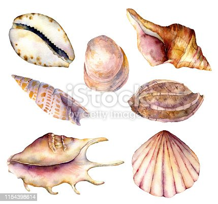 Watercolor sea shells set. Hand painted underwater element illustration isolated on white background. Aquatic illustration for design, print or background