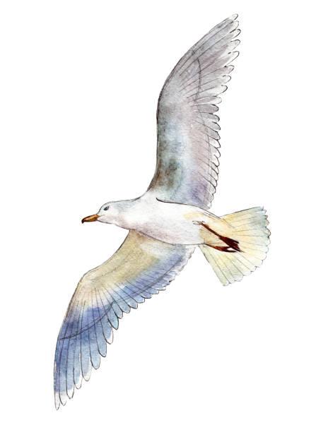 Best Sea Bird Illustrations, Royalty-Free Vector Graphics ...