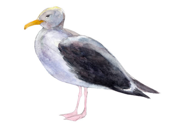 Top 60 Sea Bird Clip Art, Vector Graphics and ...