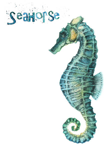 Watercolor seahorse Watercolor seahorse isolated on white background sea horse stock illustrations