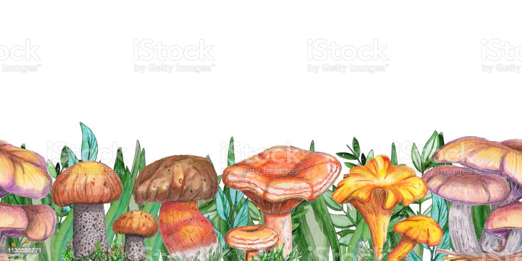 Image result for mushrooms banner