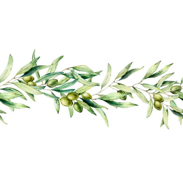akwarela bez szwu granicy z gałązką drzewa oliwnego, zielonej oliwek i liści. ręcznie malowana kwiatowa ilustracja odizolowana na białym tle. botaniczny baner do projektowania lub drukowania. zielone rośliny. - gałąź część rośliny stock illustrations