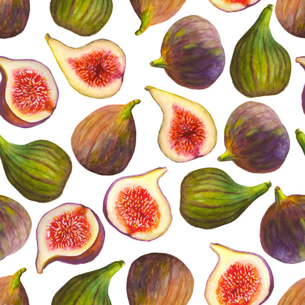 Watercolor seamless pattern figs fruits on white background Watercolor hand painted seamless pattern figs fruits on white background fig stock illustrations