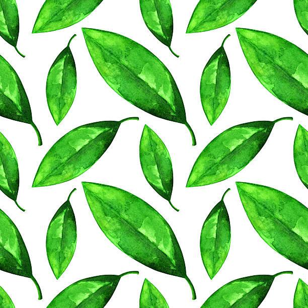 illustrazioni stock, clip art, cartoni animati e icone di tendenza di acquerello seamless pattern con foglie verdi - camellia sinensis