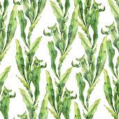 Spirulina seaweeds set, sketch vector illustration. Kelp leaves, powder and pills. Hand drawn superfood design elements, isolated on white background.