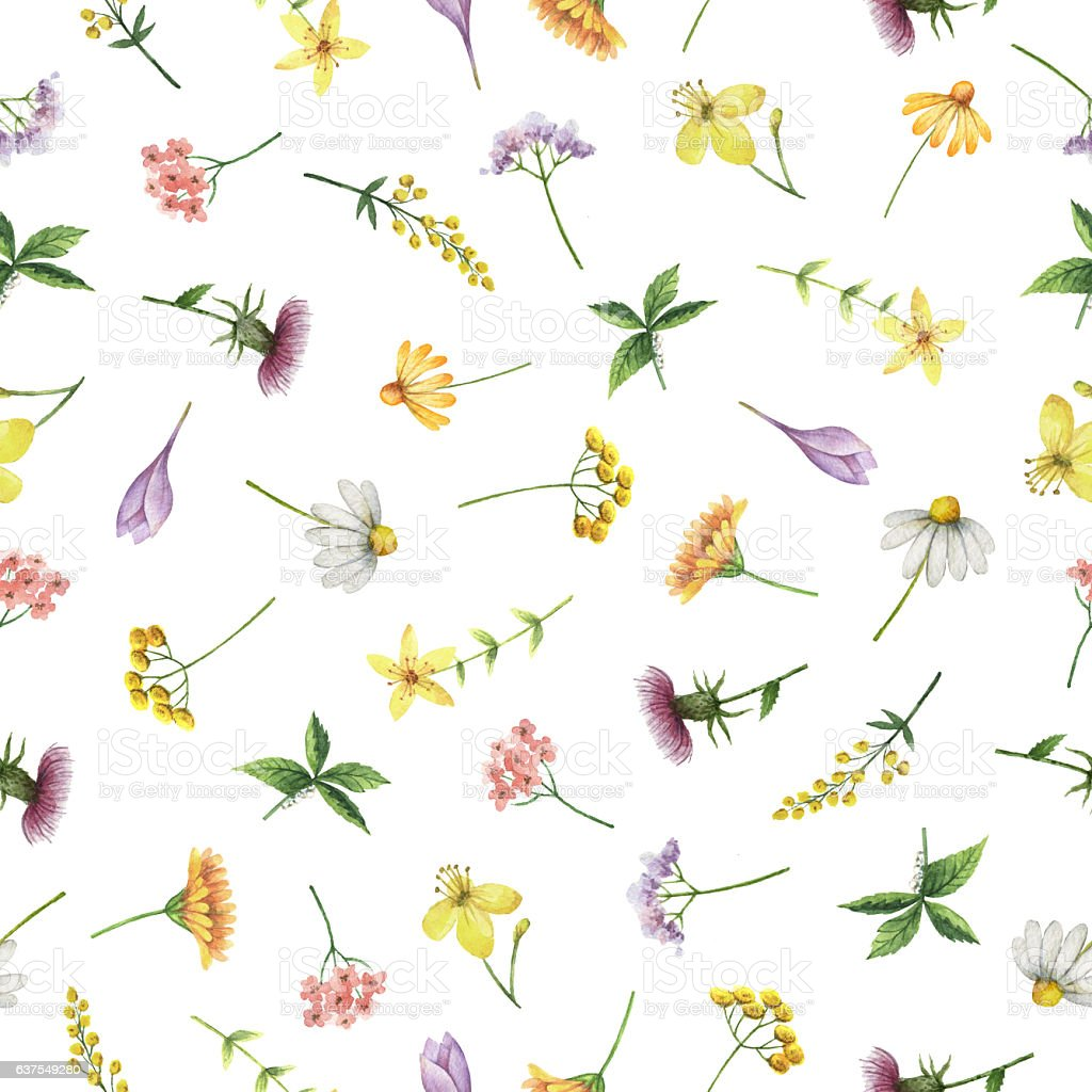 Watercolor seamless pattern with medical herbs and plants. vector art illustration