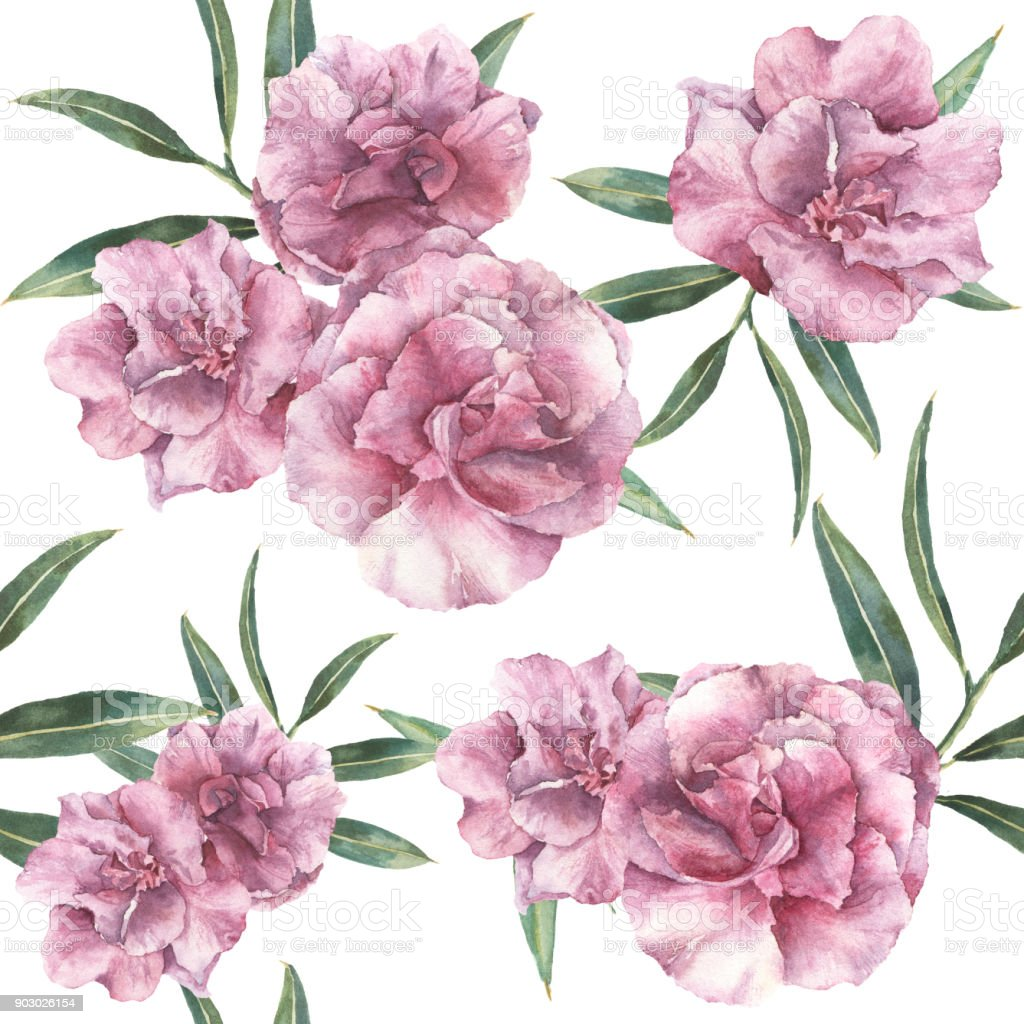 Watercolor Seamless Pattern With Oleander Hand Painted Oleander