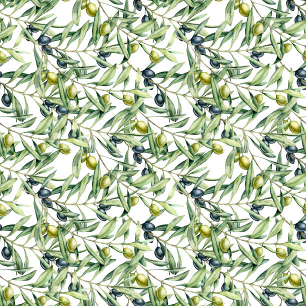 illustrazioni stock, clip art, cartoni animati e icone di tendenza di watercolor seamless pattern with olives branches. hand painted olives and leaves isolated on white background. botanical illustration for design, print, fabric or background. - verde cachi