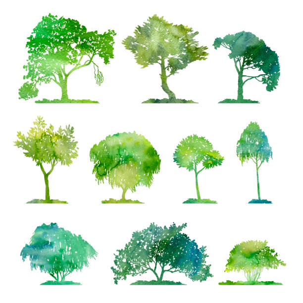 Best Elm Tree Illustrations, Royalty-Free Vector Graphics ...