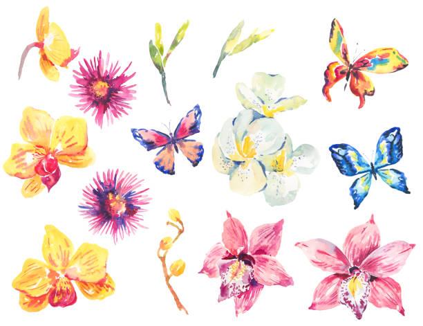 c38f6f5a0 Watercolor set of floral tropical orchid elements vector art illustration