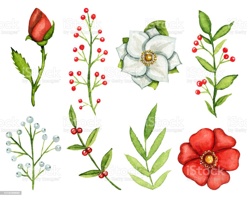 Watercolor set of flowers and twigs vector art illustration