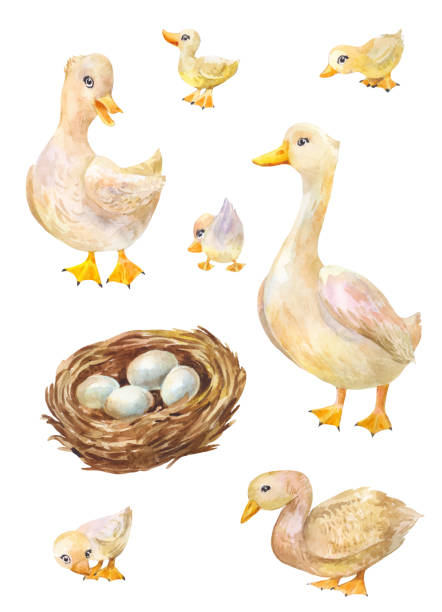 Watercolor set of geese. Illustration of cute village's birds Watercolor set of geese. Illustration of cute farmer's bird duckling stock illustrations