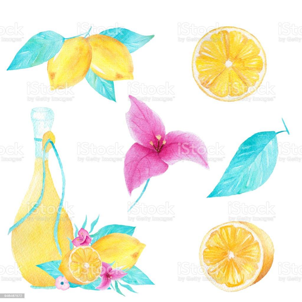 Limon, zeytin yağı, yaprak ve bouganvillea çiçek beyaz zemin üzerine suluboya kümesi. Kullanılabilir yazdırma, Dekorasyon, davet için. vektör sanat illüstrasyonu