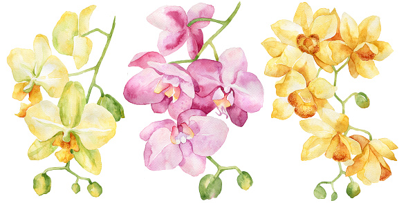Watercolor set of orchid. Hand drawn illustration. Isolated on white background