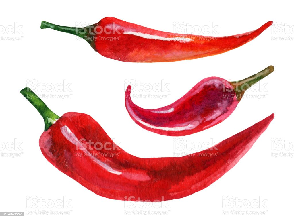 Watercolor set of red chili pepper, hand painted illustration vector art illustration