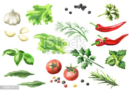 Watercolor set of spices and herbs, isolated on a white background