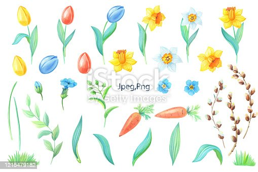 istock Watercolor set of spring flowers, yellow daffodils,blue forget-me-not,willow,branches,red tulipes,carrot on white 1215479182