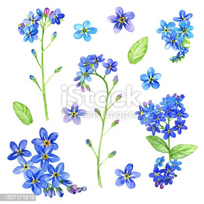 istock Watercolor set of tiny blue flowers. Forget me not, myosotis nemorosa, myosotis sylvatica. Buds, twigs and leaves. Hand drawn. Raster illustration. Perfect for decor, textile, menu, wrapping paper 1327171510