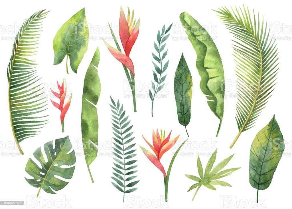 Aquarel instellen tropische bladeren en takken geïsoleerd op een witte achtergrondvectorkunst illustratie