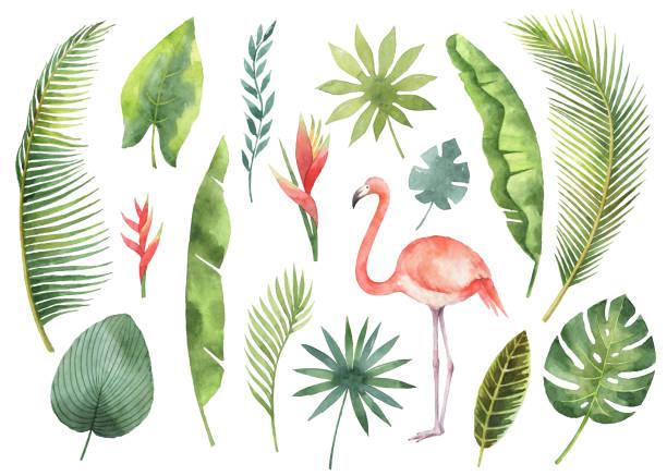 Acuarela conjunto tropicales hojas y ramas aisladas sobre fondo blanco. - ilustración de arte vectorial