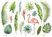 水彩画は、熱帯の葉と白い背景で隔離の枝を設定します。
