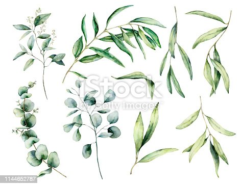 Watercolor set with olive and eucalyptus branch, leaves. Hand painted floral illustration isolated on white background for design, print, fabric or background