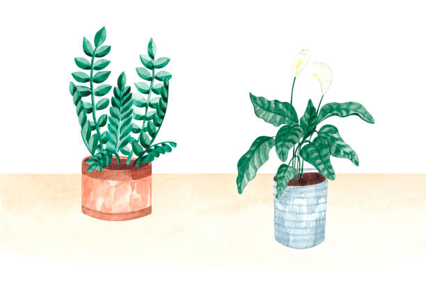 Watercolor set with potted houseplants vector art illustration