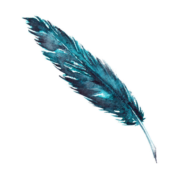 Watercolor single navy blue turquoise bird feather isolated vector art illustration