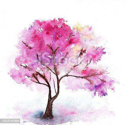 Acquerello rosa singola ciliegio sakura albero isolato for Sakura albero